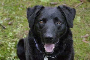 Anaalklieren bij honden