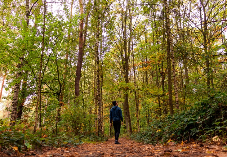 Het is herfst, tijd om het bos in te gaan