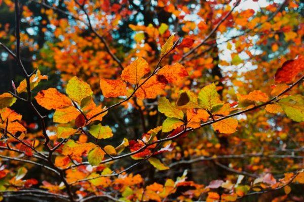 Goed voorbereid richting de wisselvallige herfst